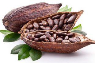قیمت بهترین پودر کاکائو