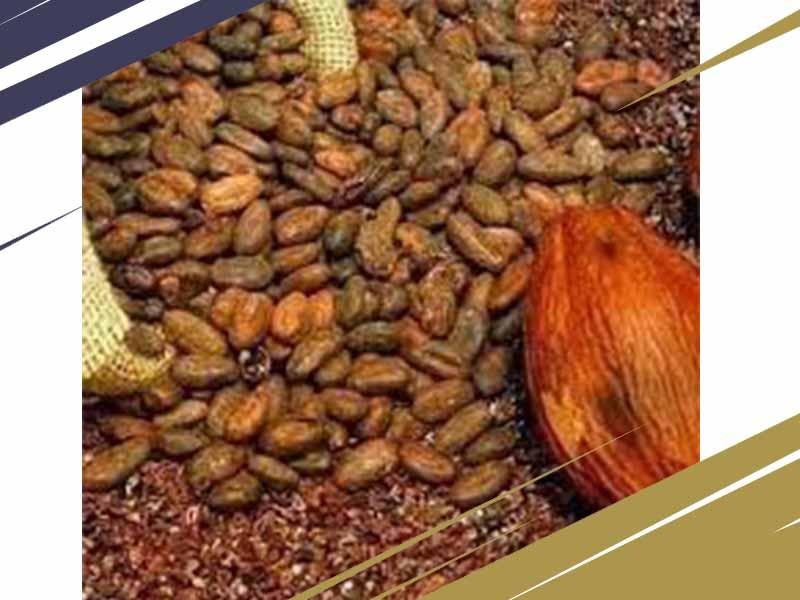 قیمت فروش پودر کاکائو اندونزی