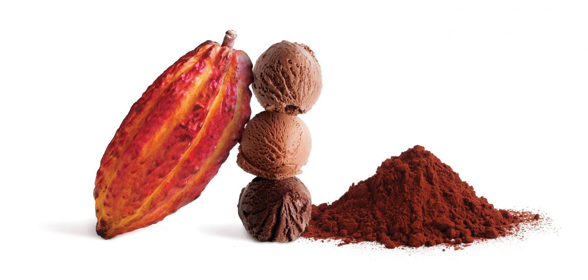 خرید پودر کاکائو کارگیل هلند Cargill cocoa powder