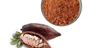 وارد کننده پودر کاکائو نچرال