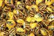 خرید شکلات فلهای خارجی | واردات شکلات